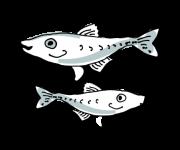 Opdræt af værtsfisk fisk til den tykskallede malermusling
