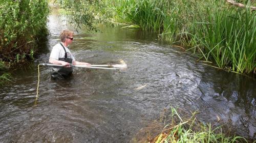 Fiskeundersøgelse